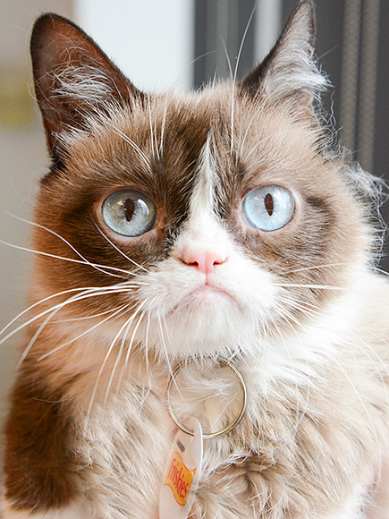 Grumpy Cat and Nala Team Up with Friskies to Help Feed Shelter Cats