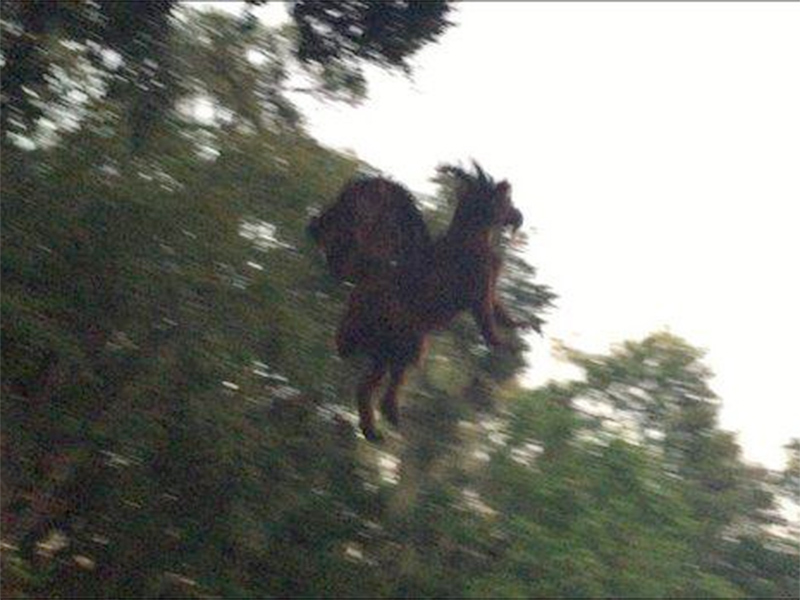 a picture of the Jersey Devil in flight