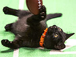 7 Reasons We're Pumped for the Kitten Bowl