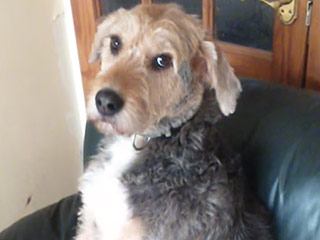 VIDEO: Check Out Benny the Guilty Dog's 'Who Me?' Face