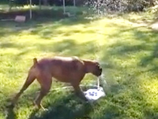 This Dog's Reaction to a Water Fountain Will Make Your Day