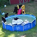 Who's Been Playing in My Pool? Family's Backyard Invaded by Bears in Pawsibly the Cutest Pool Party Ever