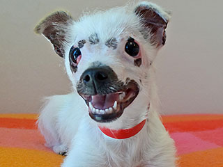 Dog with 'Strange' Eyes Finds Forever Home (and the Most Perfect New Name)