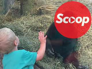 WATCH: A Gorilla and a Toddler Play Together in the Cutest Game of Peek-a-Boo Ever