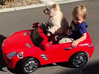 Canine Cruise Control: Dog Calmly Drives Little Boy Around in Convertible