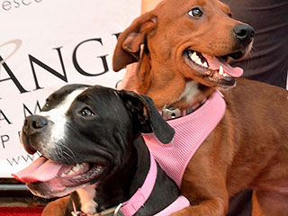 Update: 'Hugging Dogs' Who Found a Home Continue to Hug!