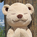 Meddy Teddy Helps Kids Learn About Yoga and Meditation