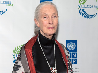Jane Goodall Responds to Harambe's Death: