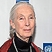 Jane Goodall Responds to Harambe's Death: 'It Looked as Though the Gorilla Was Putting an Arm Around the Child'