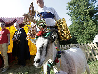 Meet Lithuania's 'Most Beautiful Goat' Winner