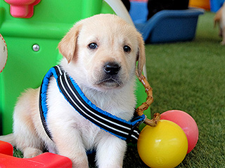 PEOPLE's Guide Dog at Large, Murphy the Puppy, Is the Star of His Class (Watch the Video Proof!)