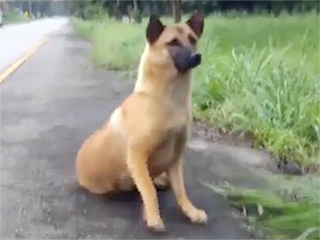 Dog Abandoned on Road Is Struck and Killed By Car While Waiting for Owners to Return