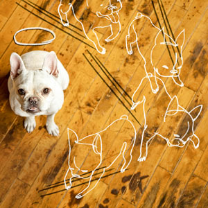 how to fix scratches and stains from pets on wood floors