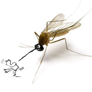 mosquito chasing a man
