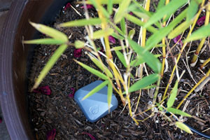 small electronic device resting on the soil in a potted plant with a wire barely visible running off the right side of the pot