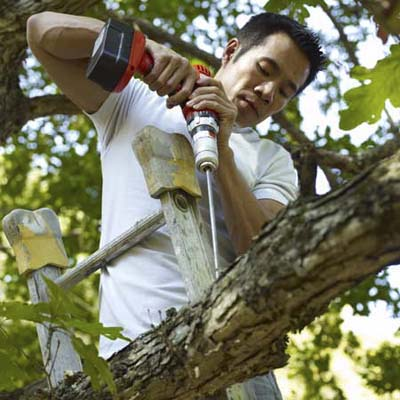 drilling a hole in the tree branch to protect the tree