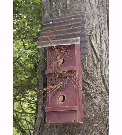 nest box attached to tree trunk for wrens, nuthatches and chickadees