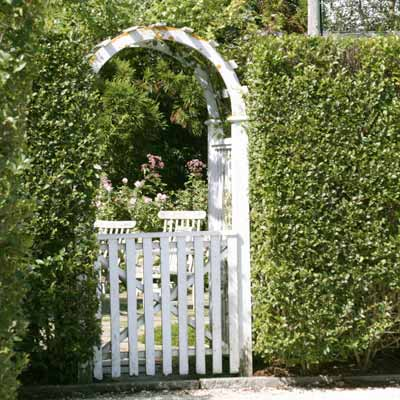 privet hedge and gate