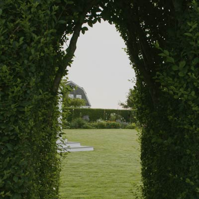 vista beyond privet hedge