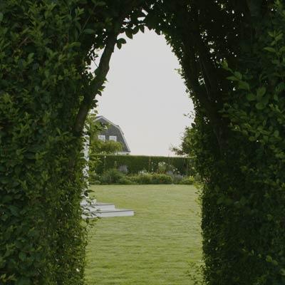 vista beyond privet hedge