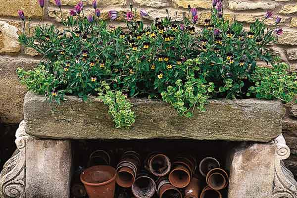 old stone trough used as container plant for violas and loosestrife