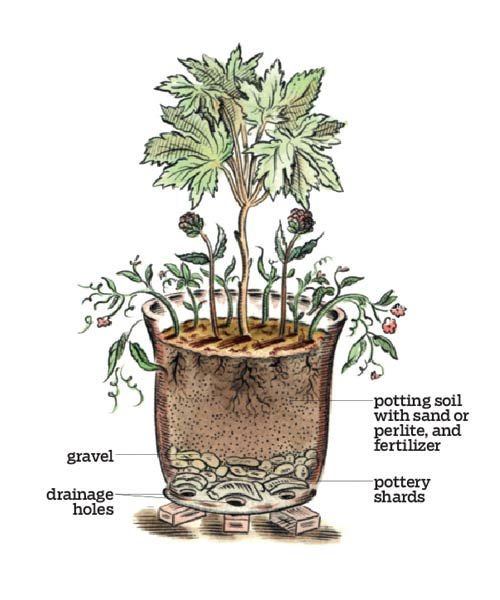 illustrated diagram of parts in a container garden