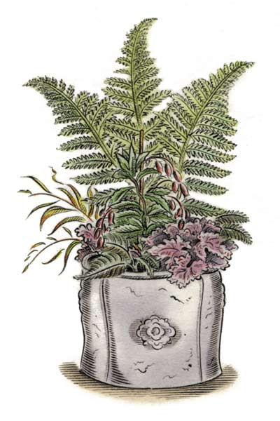 illustration of container plant