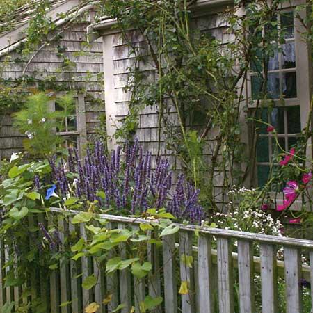 purple veronica and morning-glory foliage