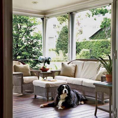 Ziggy the Bernese moutain dog enjoying the mahogany floors