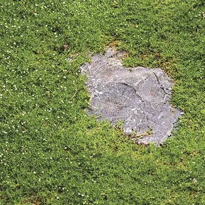 groundcover for partial sun exposure