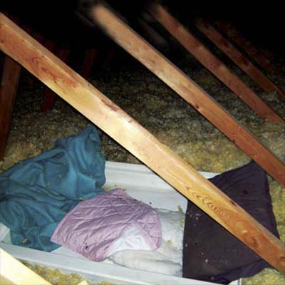 bed setup among the insulation in the attic