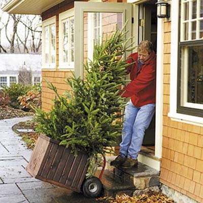 man dragging a boxed christmas tree through a door into a house