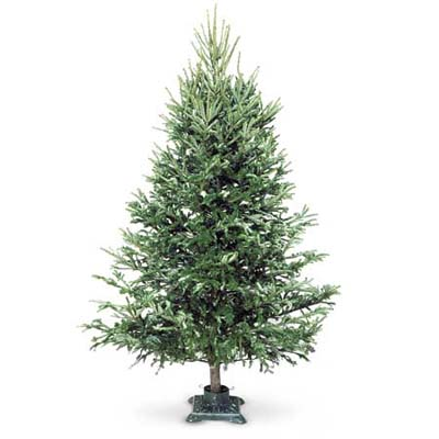 christmas tree in a stand