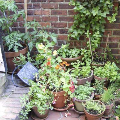herb garden, container garden, tomato plants