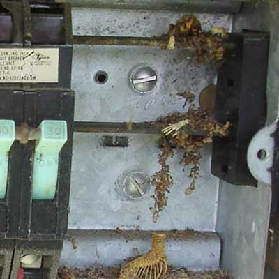 animal bones and skin found inside an electrical box