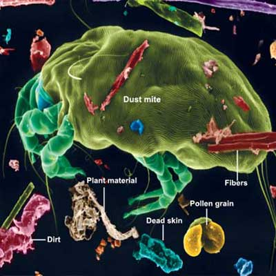 image of a dust mite surrounded by other allergens
