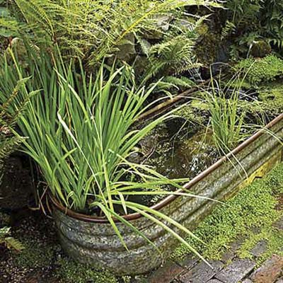 water garden in repurposed trough