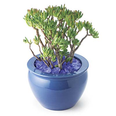 potted plant with shimmering sea glass laid over soil