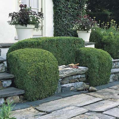 green shrubs planted around stone garden bench