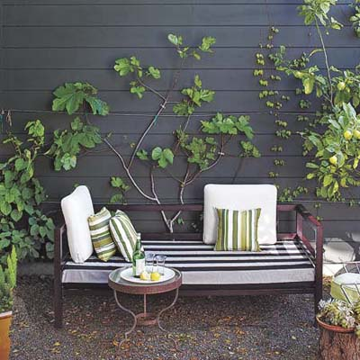 espaliered fruit tree against exterior wall