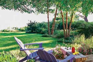 a backyard patio with heritage river birch trees for shade