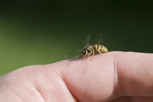 bee on a person's finger, ways a barbecue can kill you