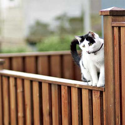 example of a vertical board fence