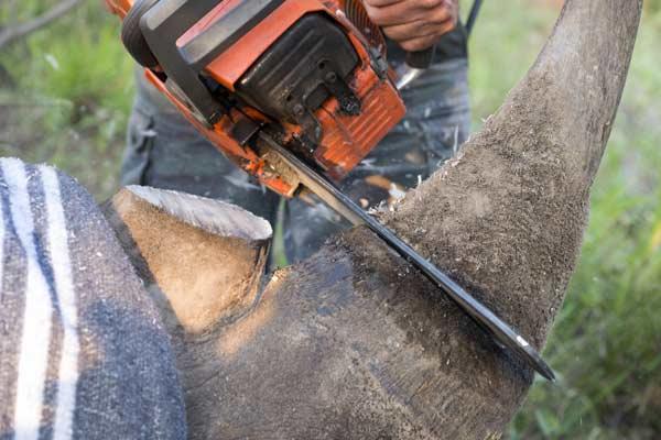 man using chainsaw on tree