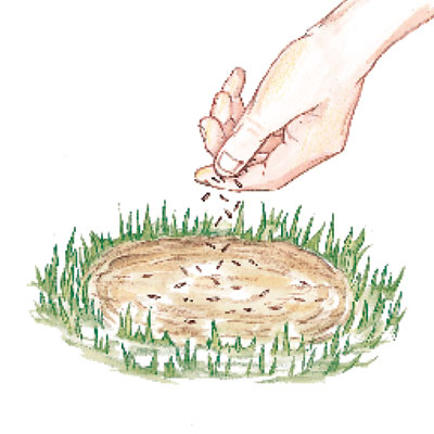 illustration of hand sprinkling lawn seed on soil