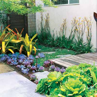 4 focus on water thrifty perennials to provide color and for Outdoor plants easy to care for