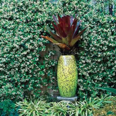 chartreuse vase holding burgundy bromeliad in outdoor garden