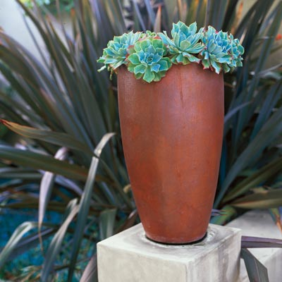 ceramic vase holding succulents in outdoor garden