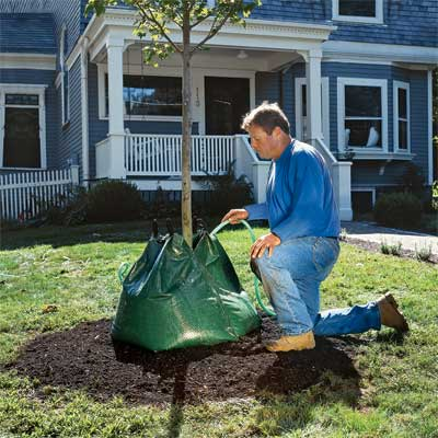 t o h landscape contractor roger cook showing how to plant a tree