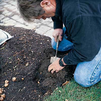 man digging hole to plant spring flower bulbs in fall